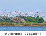 flock of pink flamingos from ... | Shutterstock . vector #713238547