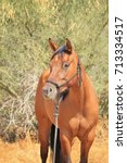 Small photo of Young Horse on leather halter