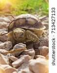 Small photo of Close up African spurred tortoise resting in the garden, Slow life ,African spurred tortoise sunbathe on ground with his protective shell ,Beautiful Tortoise ,Geochelone sulcata