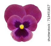 clipart made of natural violet