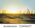 bushes and trees in the desert... | Shutterstock . vector #713456377