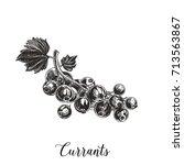 vector hand drawn berry... | Shutterstock .eps vector #713563867