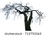 tree isolated or tree isolated