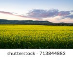 canola fields during sunset... | Shutterstock . vector #713844883