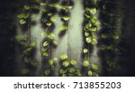 hang green leaf abstract grim... | Shutterstock . vector #713855203