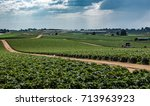 a field of strawberry crops... | Shutterstock . vector #713963923