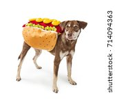 funny photo of a dog wearing a... | Shutterstock . vector #714094363