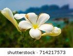 flora and sea flower...   Shutterstock . vector #714217573