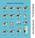 dogs emotion expression vector... | Shutterstock .eps vector #714232603