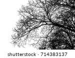 realistic tree silhouette ... | Shutterstock .eps vector #714383137