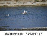 the sea bird | Shutterstock . vector #714395467