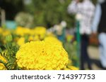 kashmir  india   september 25 ... | Shutterstock . vector #714397753