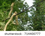 cosheston  pembrokeshire  uk  ... | Shutterstock . vector #714400777