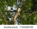 cosheston  pembrokeshire  uk  ... | Shutterstock . vector #714400783