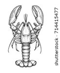 ink sketch of lobster. isolated ... | Shutterstock .eps vector #714415477
