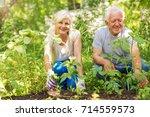 happy healthy seniors gardening  | Shutterstock . vector #714559573