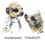 Watercolor Meerkat Illustratio...
