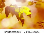 abstract autumn leaves.... | Shutterstock . vector #714638023