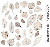 herbarium   collection of leaf... | Shutterstock . vector #714692707