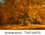 autunm tree in the park ... | Shutterstock . vector #714716923