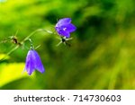 two blue wild and meadow... | Shutterstock . vector #714730603