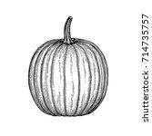 ink sketch of pumpkin isolated... | Shutterstock .eps vector #714735757