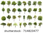 isolated tree on white... | Shutterstock . vector #714823477