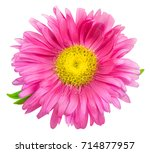 daisy chrysanthemum chamomile... | Shutterstock . vector #714877957