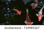 Colorful Fancy Japanese Carp...