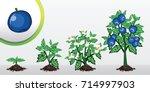 infographic tree planting.... | Shutterstock .eps vector #714997903
