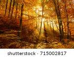 autumn forest illuminated by... | Shutterstock . vector #715002817