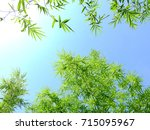green bamboo leaf against blue... | Shutterstock . vector #715095967