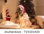 funny golden retriever dog in... | Shutterstock . vector #715101433