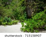 tropical forest on the phi phi... | Shutterstock . vector #715158907