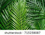 Tropical Palm Foliage  Greener...