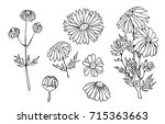 camomile hand drawn vector set | Shutterstock .eps vector #715363663