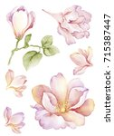 Stock photo watercolor illustration bouquet in simple white background 715387447