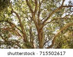 under the shade of tall trees... | Shutterstock . vector #715502617