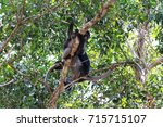 dusky leaf monkey  spectacled...   Shutterstock . vector #715715107