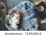 Stock photo lazy cat sleeps and yawns on soft woolen sweater on sofa decorated with led lights winter or 715918513