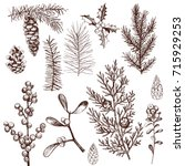christmas plants set. vector...   Shutterstock .eps vector #715929253