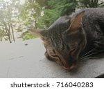 Gray Striped Cat Sleeping On A...