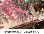 blossomed tree with pink... | Shutterstock . vector #716055277