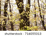 green forest in the spring ... | Shutterstock . vector #716055313