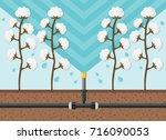 cotton plantation watering flat ... | Shutterstock .eps vector #716090053