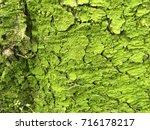 greenish bark of an old tree | Shutterstock . vector #716178217