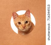 cute little orange tabby kitten ... | Shutterstock . vector #716344513