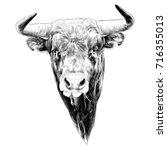 bull sketch vector graphics... | Shutterstock .eps vector #716355013