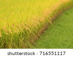 Small photo of Japanese rice field
