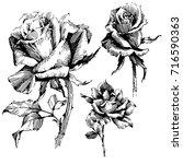 wild flowers roses isolated.... | Shutterstock .eps vector #716590363